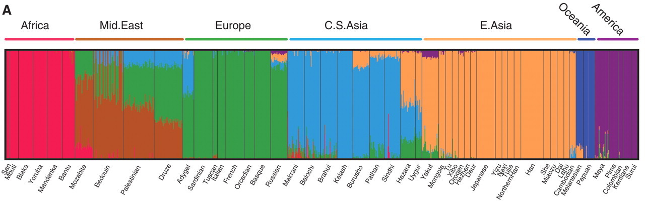 Regional ancestry inferred with the frappe program at K = 7 (13) and plotted with the Distruct program (31). Each individual is represented by a vertical line partitioned into colored segments whose lengths correspond to his/her ancestry coefficients in up to seven inferred ancestral groups. Population labels were added only after each individual's ancestry had been estimated; they were used to order the samples in plotting. Figure and caption from [Li et al. 2009](https://doi.org/10.1126/science.1153717).