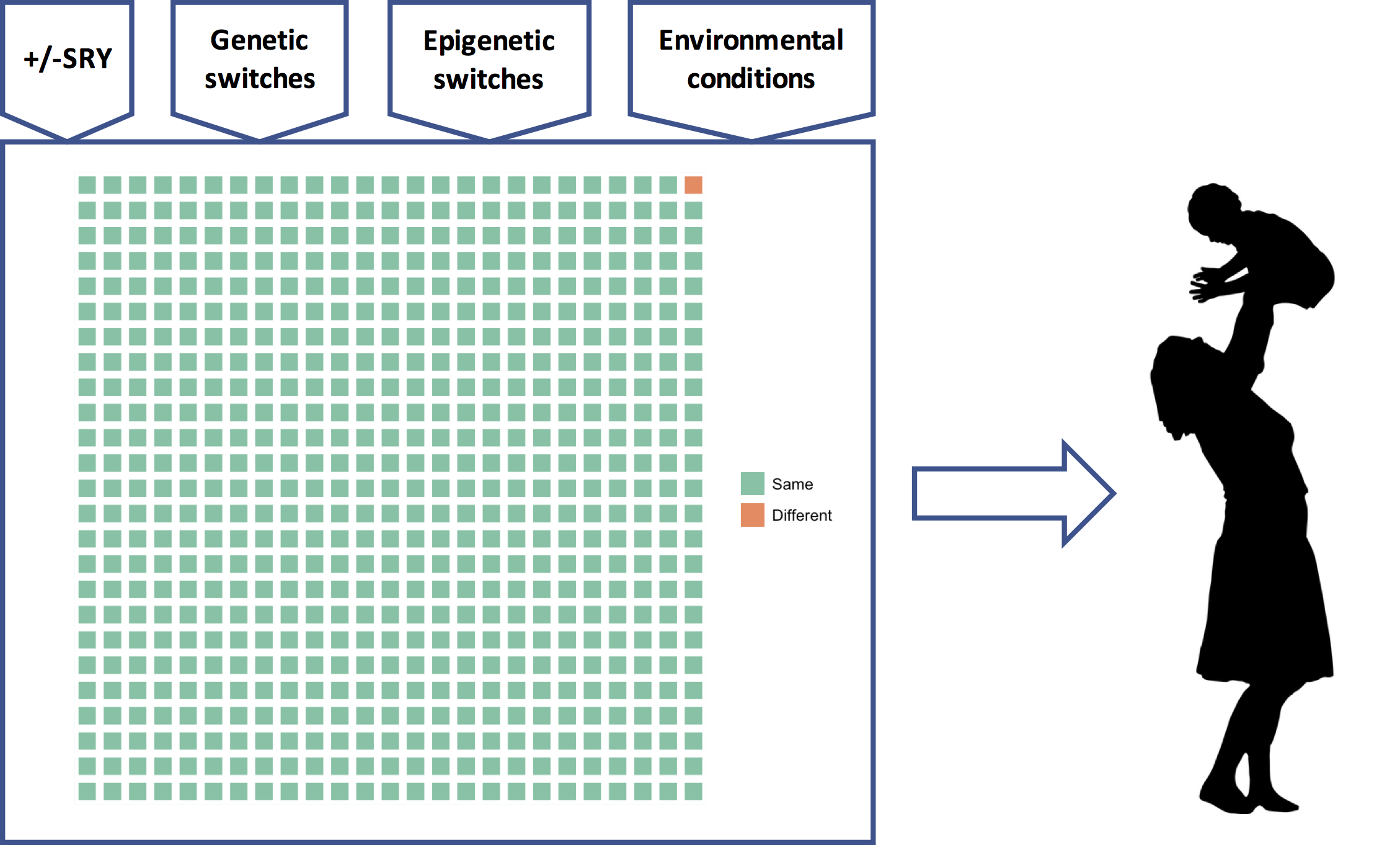 The genetic program model of the genome. A universal genetic program comprising thousands of GRNs (green squares) reads many different types of inputs and to produce a phenotype that is custom-built for (its best guess about) the upcoming selective environmental conditions.
